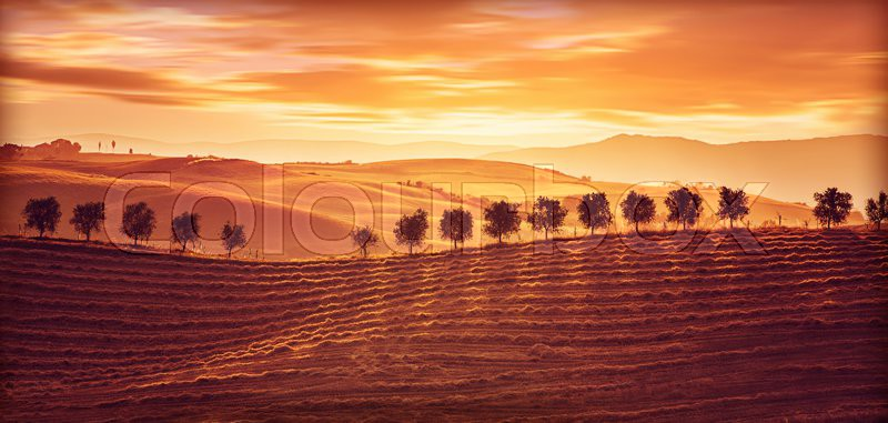 Beautiful countryside landscape, amazing orange sunset over golden ripe wheat hills, beauty of nature, agriculture and farming concept, stock photo