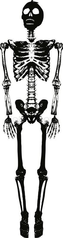 ärztin, struktur, skelett- | Vektorgrafik | Colourbox