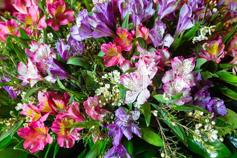 Big multicolor alstroemeria (magenta - pink - red) wonderful summer ...