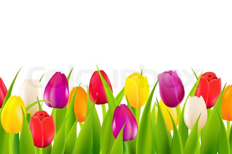 Tulips flower border design