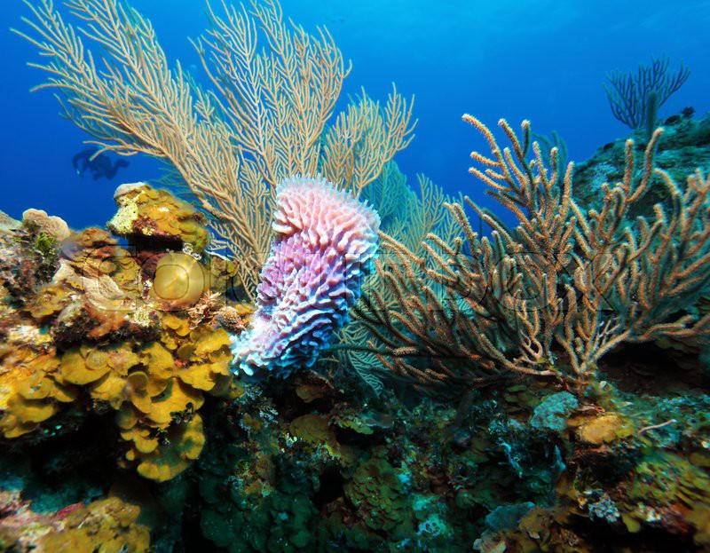 nature coral underwater landscape - photo #21