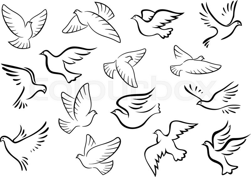 pigeon and dove birds silhouettes in sketch style for peace or love concept design stock vector colourbox