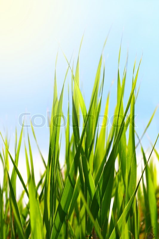 Stock image of 'background, blue, meadow'