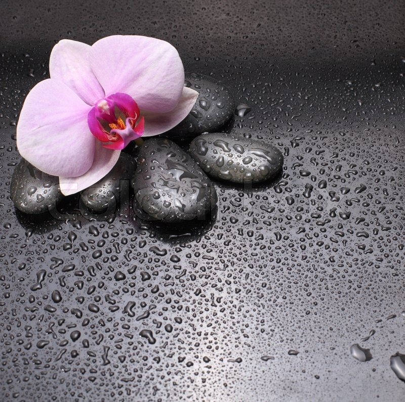 Stock image of \'spa, rock, flower\'