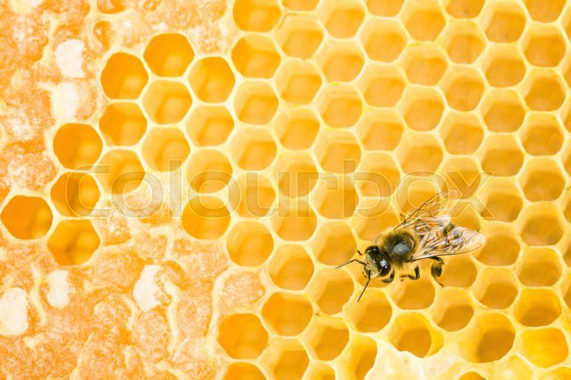 Working bee on wax honeycomb, stock photo
