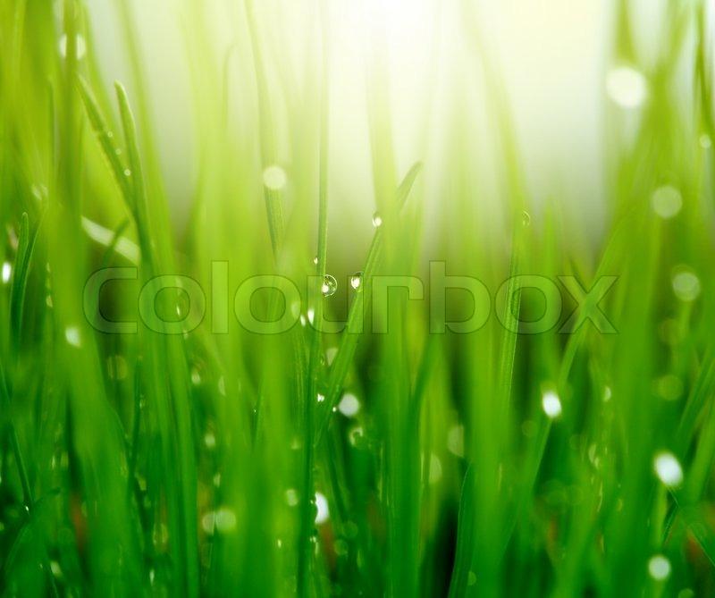 Stock image of \'spring, leaf, natural\'
