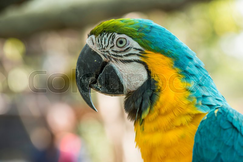 Stock image of 'Blue and yellow macaw.'