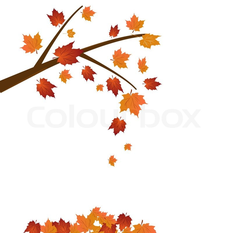 Branch Of Maple Tree Autumn Leaf Stock Vector Colourbox