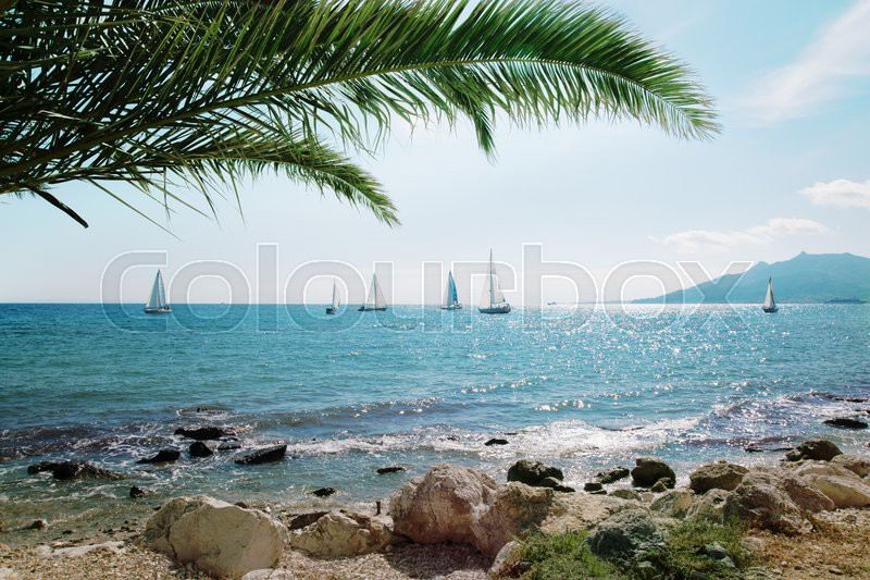 Sailing ship yachts with white sails and palm leaves, stock photo