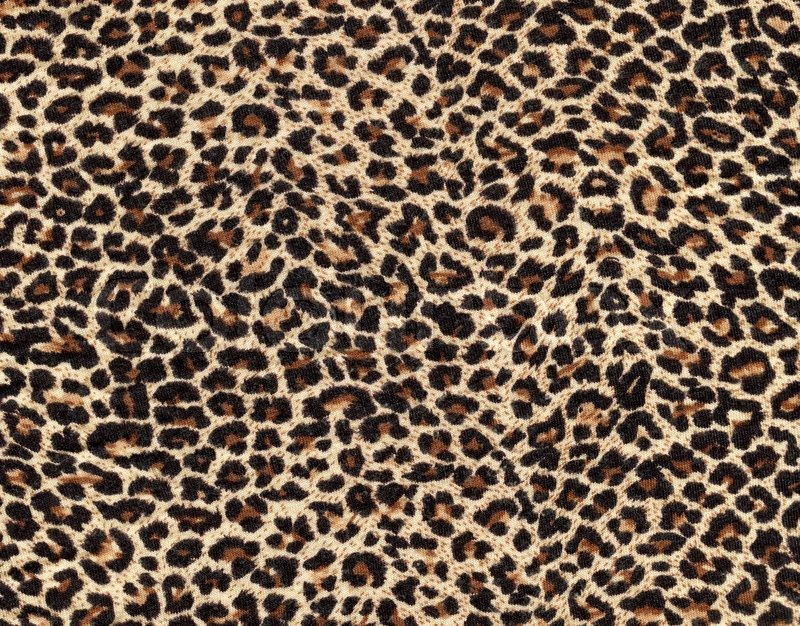 Leopard skin as background | Stock Photo | Colourbox