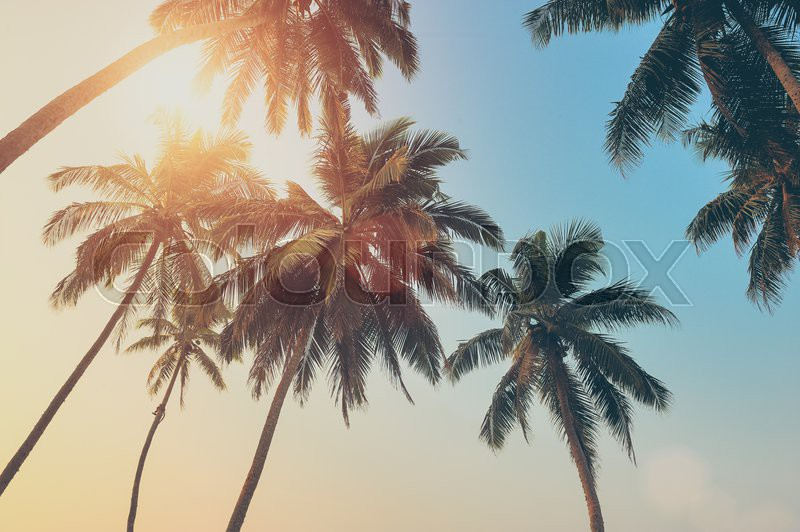 Beautiful tropical sunset with palm trees at beach. Vintage effect, stock photo
