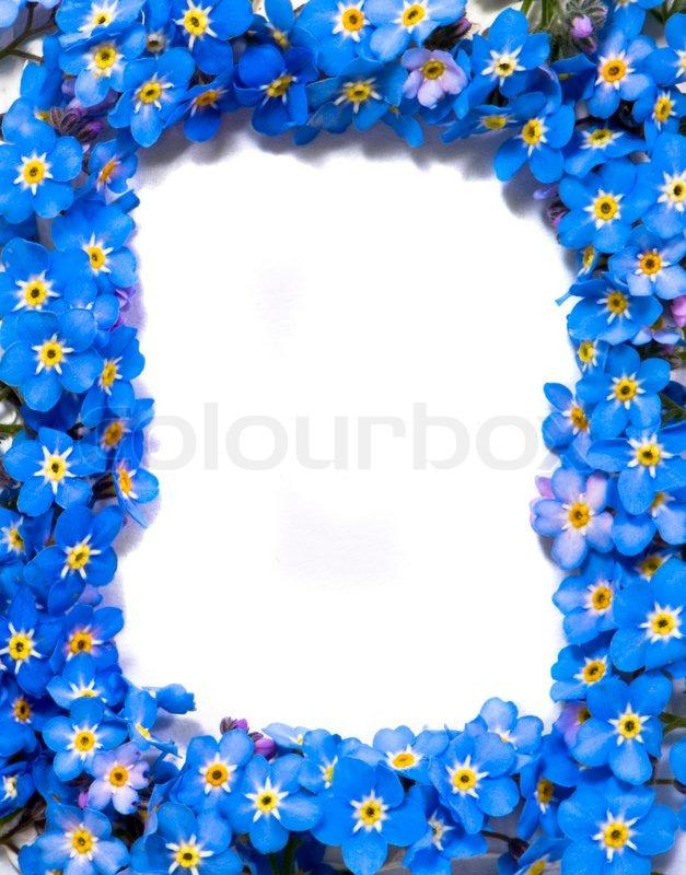 Vergissmeinnicht Blumen Rahmen Stock Foto Colourbox