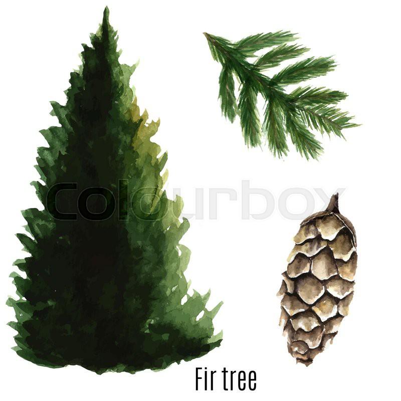 Fir Tree Watercolor Vector Stock Vector Colourbox