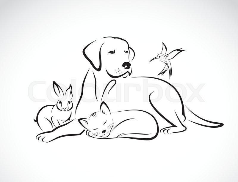 Line Drawing Pet Animals : Haustier piktogramm beschützen stock vektor colourbox