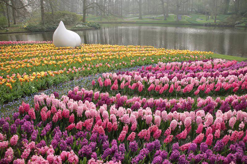 Image result for wonderful images Tulip in Keukenhof