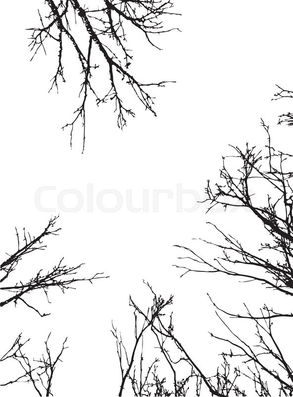 Grunge black silhouettes of naked tree branches frame on white ...