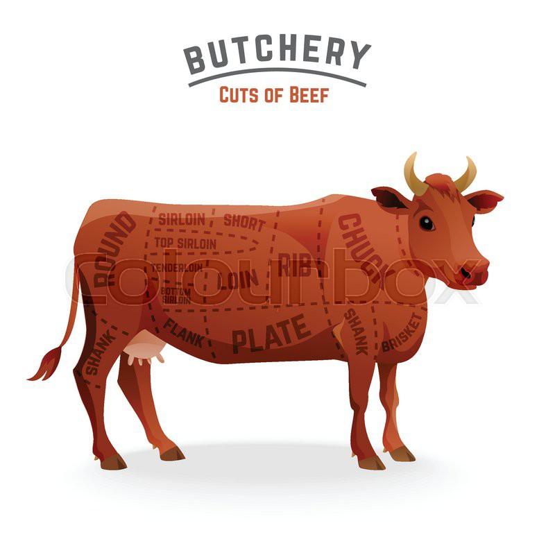 Butchery Beef Cuts Diagram Vector Illustration Stock Vector
