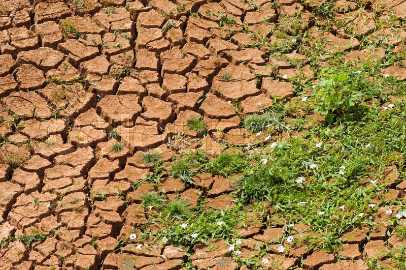 Arid land with green plant, stock photo