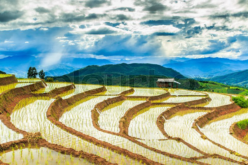 Paddy - rice fields at pa pong peang chiang mai asia Thailand, stock photo
