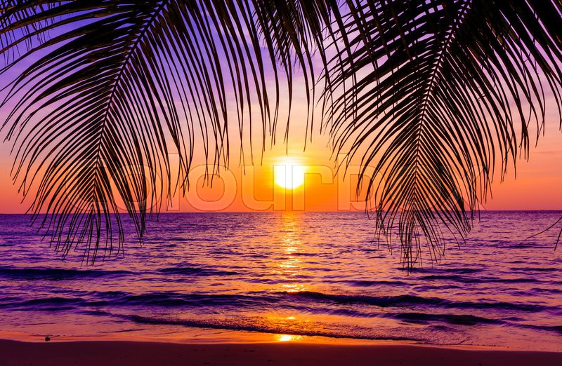 Sunset Over Beach Of Palm Trees Hd Wallpaper: Beautiful Sunset. Sunset Over The Ocean With Tropical Palm