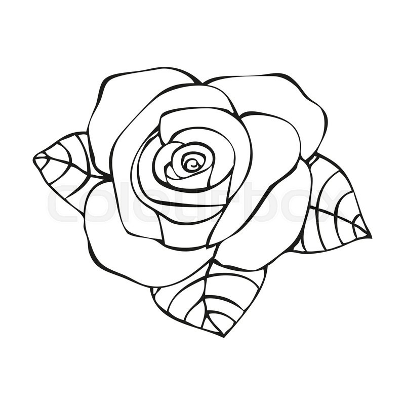Rose Line Drawing Tattoo : Rose in tattoo style hand drawn flower vector