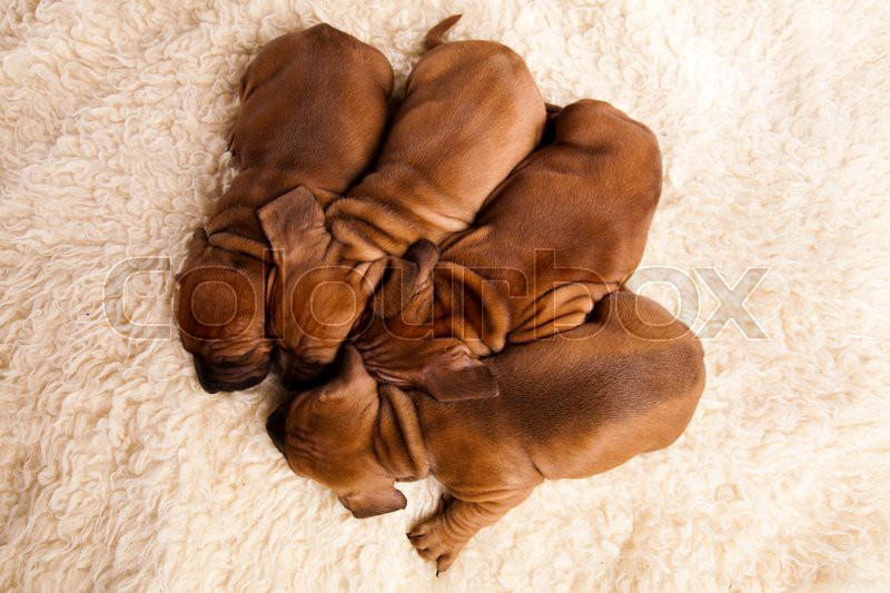 Sleep dogs in a basket, beautiful bright pet concept, stock photo