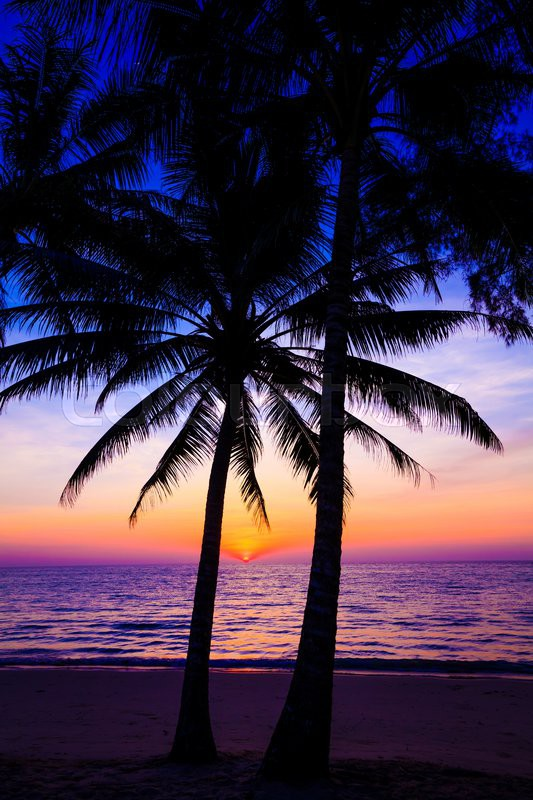 Beautiful Sunset Over The Ocean With Tropical Palm Trees Paradise Beach