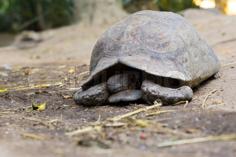 Turtle sand south africa reptile wildlife animal, stock photo