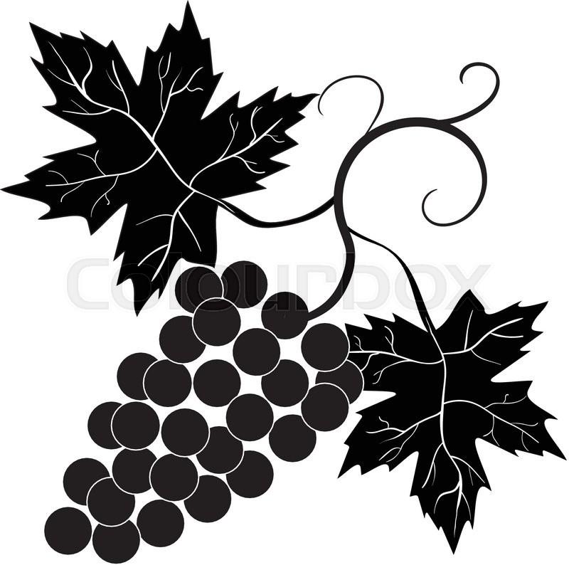 Decorative grapes vine vector ornament 1 | Stock Vector | Colourbox
