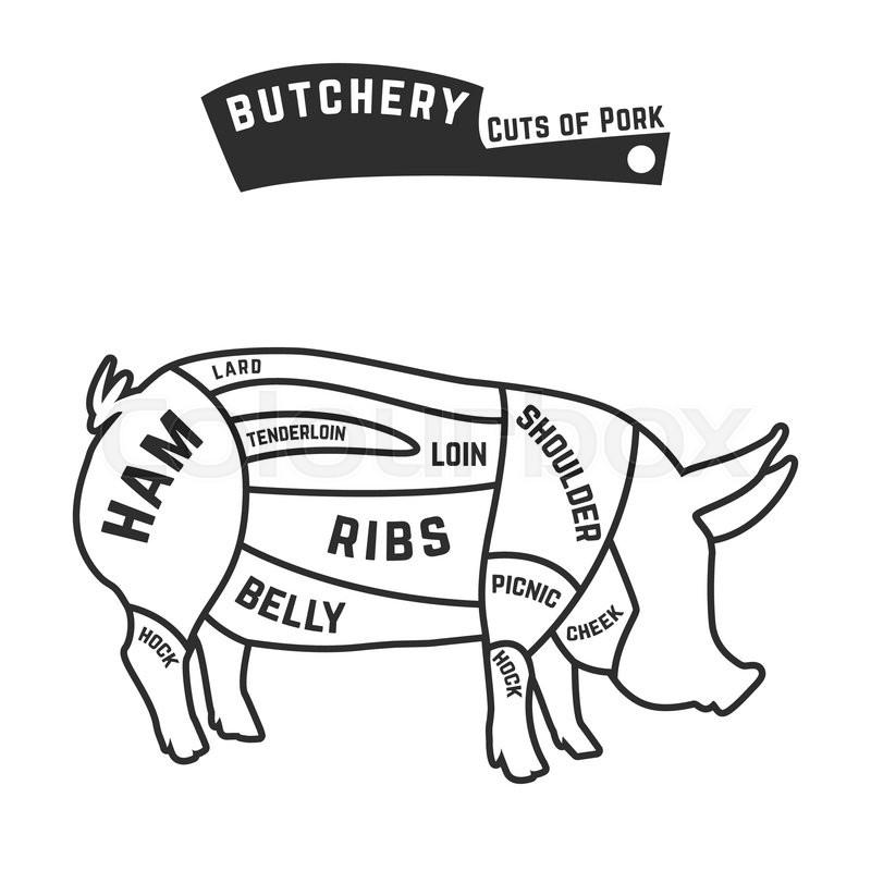 cuts of pork outline   vector illustration