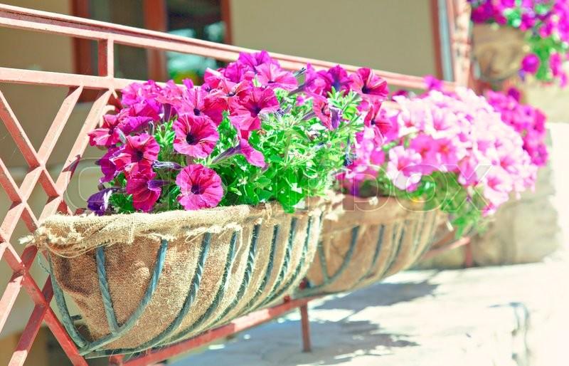 Image of a balcony flower box, stock photo