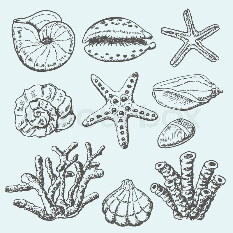 High Quality Vector Collection Of Sea Shells, Coral And Starfish. Hand Drawing  Illustration. Vector Illustration For Your Design | Stock Vector | Colourbox
