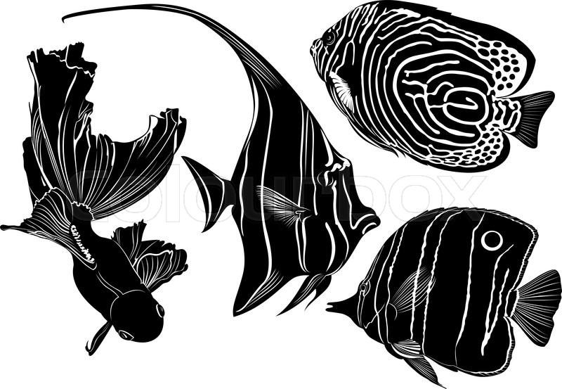 Marine Aquarium Fish Stock Vector Colourbox