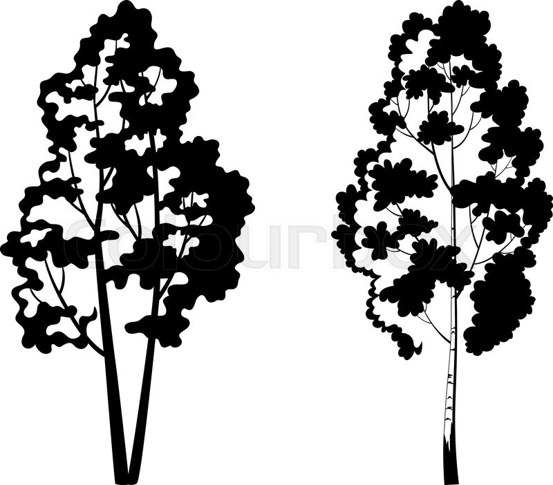 Trees Birch And Symbolic Black Silhouette Isolated On White