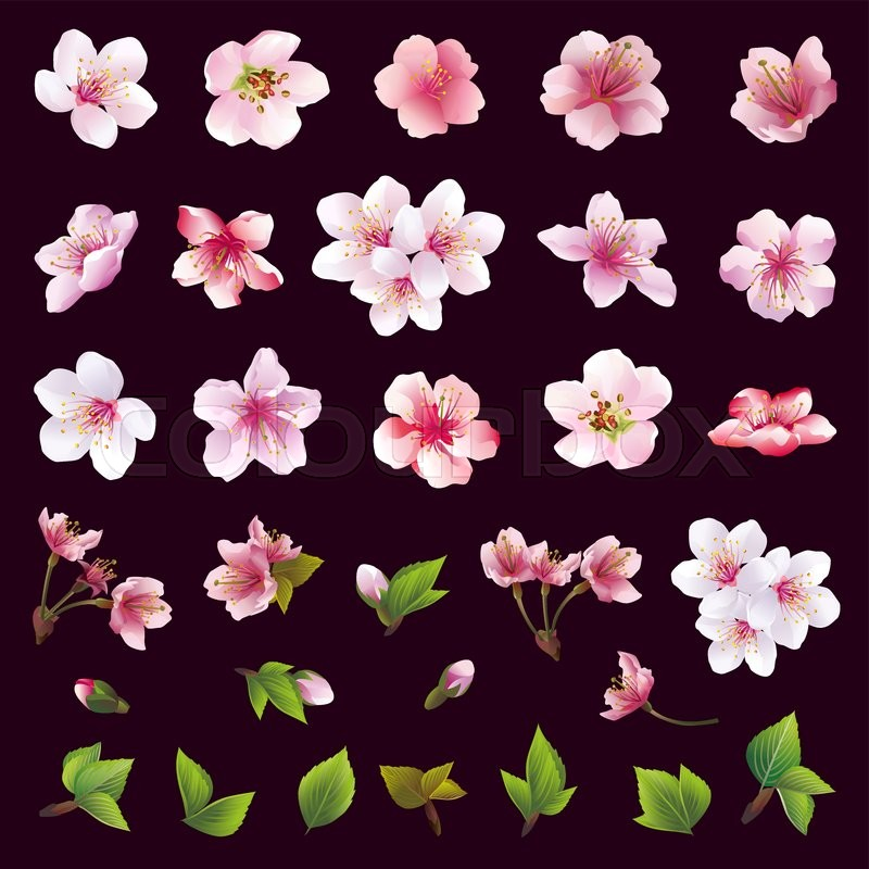 Set Of Black Flower Design Elements From My Big Floral: Big Set Of Different Beautiful Cherry Tree Flowers And
