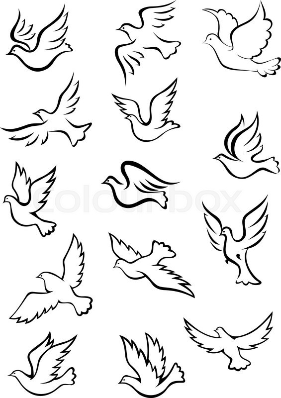 outline graceful dove and pigeon birds set in sketch style for peace religion or freedom concept design stock vector colourbox