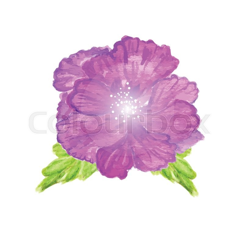 Watercolor Painted Vector Hibiscus Tropical Flower Violet Vector