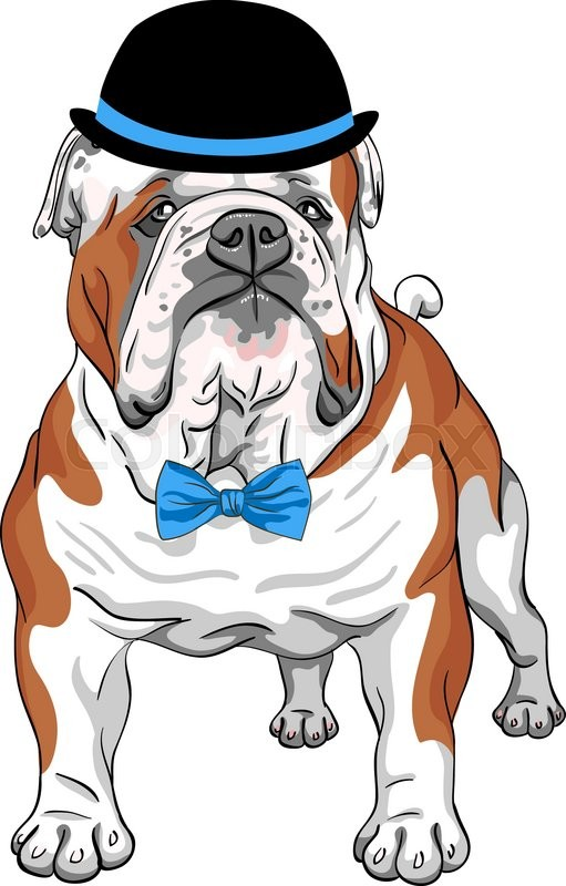 Hipster Dog English Bulldog Breed In A Black And Blue Hat