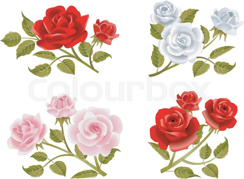 vector rose buttonholes with pink red and white roses stock rh colourbox com victor rossi clown victor rossi
