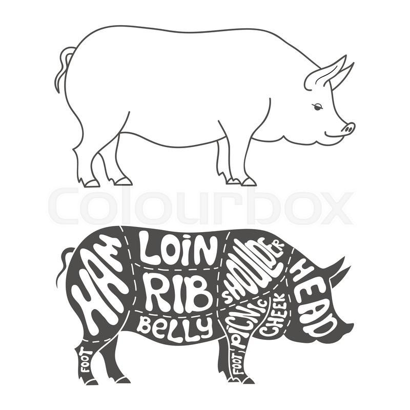 pork cuts diagram  hand drawn butcher cuts scheme