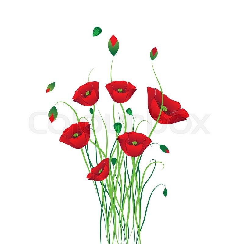 Poppy background. Flower vector. Art border pattern ...