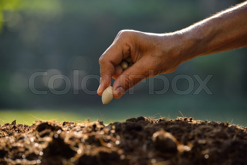 Farmer\'s hand planting a seed in soil, stock photo