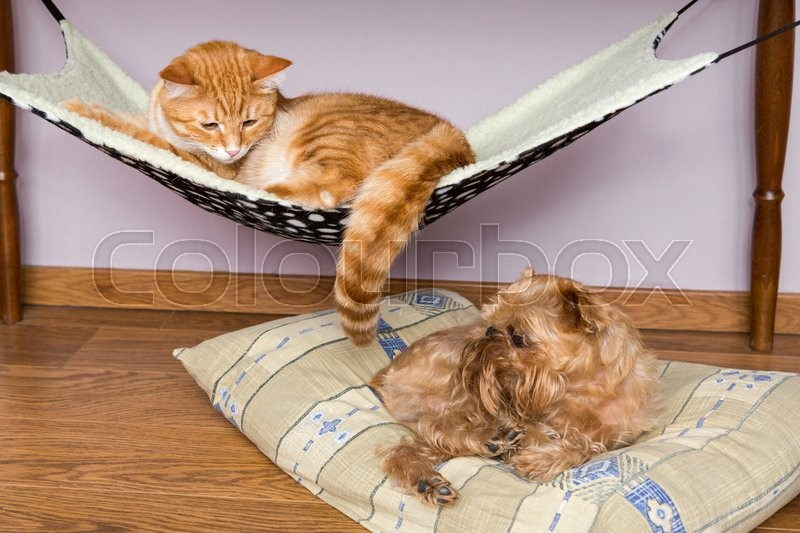 Cat and dog sleeping peacefully nearby, on the floor and in the hammock, stock photo