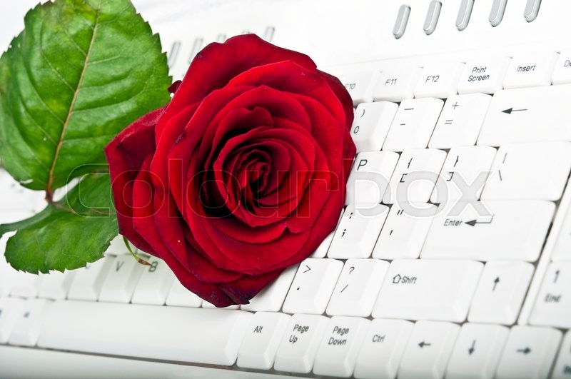 Red rose and white keyboard, stock photo