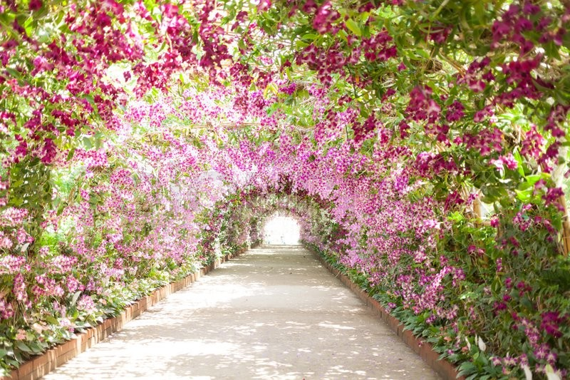 Footpath in a botanical garden with orchids lining the path, stock photo