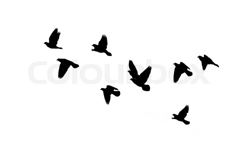 Silhouette of black birds on a white background   Stock ...