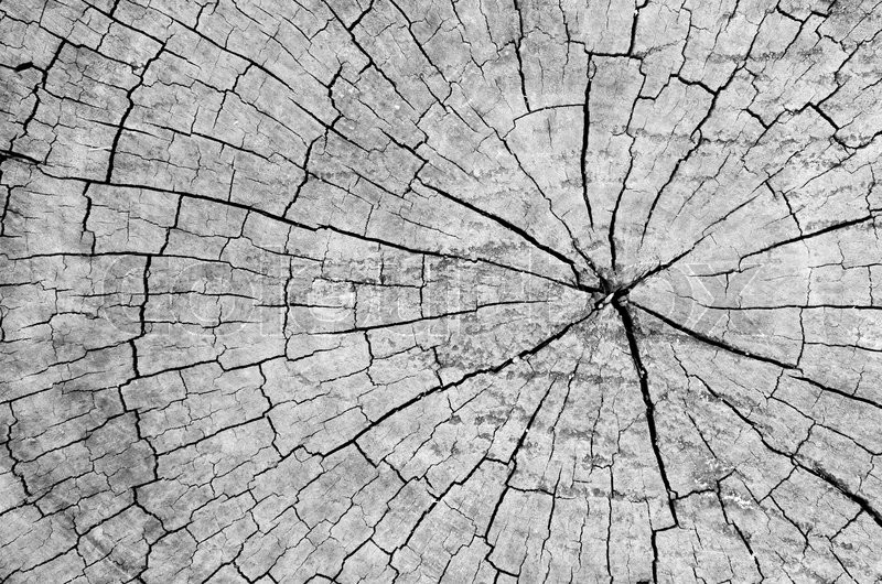 Texture of old wood with annual rings. Natural texture close-up , stock photo