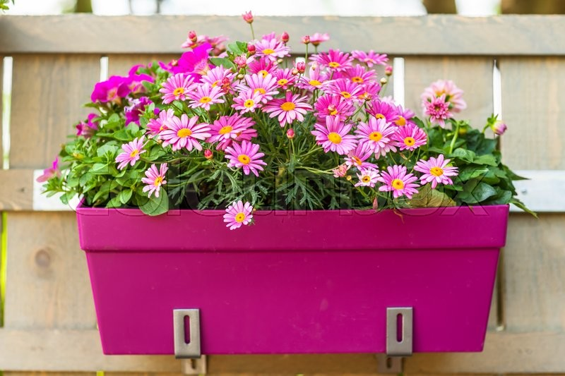 Outdoor Flower Pot Hanging On Wooden Fence For Small Garden Patio Or Terrace Stock Photo