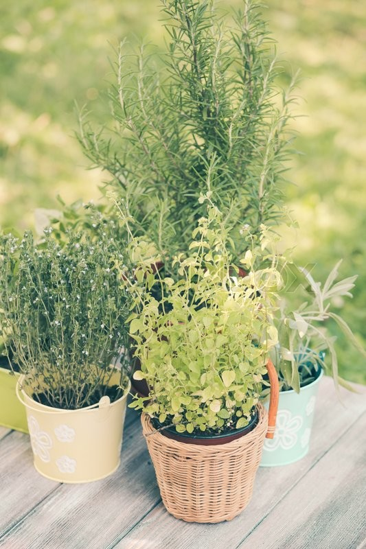 Cozy home garden with herbs - rosemary, sage, basil, thyme and oregano, stock photo