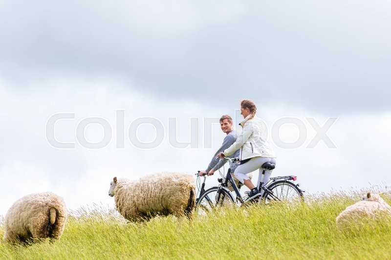 Stock image of 'Couple having bicycle tour with bike at levee with sheep'